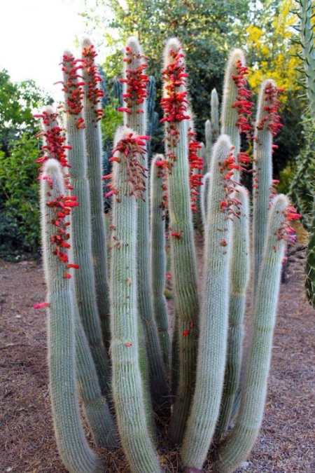 cactus love / via Lejardindeclaire