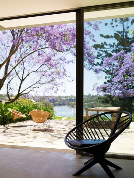 Jacaranda Tree / Via Lejardindeclaire