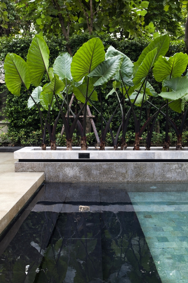 Pool inspiration / Lejardindeclaire