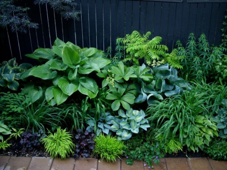 Shade plants / Slowgarden