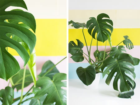 Urban Jungle Blogger / Via Lejardindeclaire